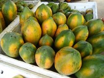 斯里兰卡的自然照片甜番木瓜  库存照片