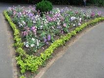 斯里兰卡的自然花 库存照片