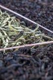 斯里兰卡的茶 免版税库存图片