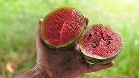斯里兰卡的著名小,但是异乎寻常的甜西瓜 库存照片