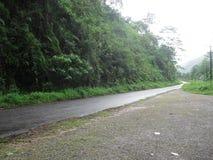 斯里兰卡的雨林路 库存照片