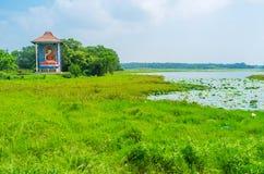斯里兰卡的绿色湖 免版税库存图片