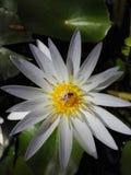 斯里兰卡的绿色自然 免版税库存照片
