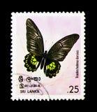 斯里兰卡的Birdwing Troides海伦娜darsius,蝴蝶serie,大约1978年 免版税库存图片