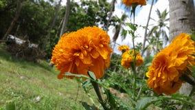 斯里兰卡的Daspethiya自然花 免版税库存照片