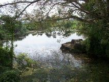 斯里兰卡美丽的Nature湖和河 库存图片