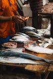 斯里兰卡鱼市 免版税库存图片
