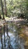 斯里兰卡` s beautyful自然或河 免版税库存图片