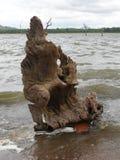 斯里兰卡dambulla kandalama坦克 库存照片