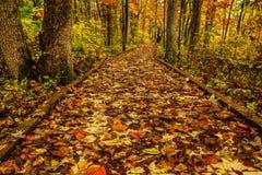 斯隆的横渡的池塘足迹在秋天 库存图片