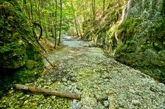 斯洛伐克天堂峡谷  免版税库存照片