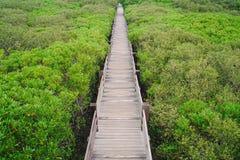 新丰美洲红树足迹在新竹,台湾 免版税库存照片