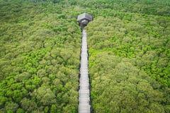 新丰美洲红树鸟瞰图-美洲红树足迹和眺望台 库存照片