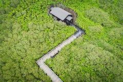 新丰美洲红树鸟瞰图-美洲红树足迹和眺望台 免版税图库摄影