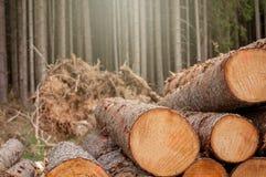 新伐木头在森林里-德国 库存图片