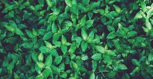 新健康生物背景迷离自然顶视图,在公园提取被弄脏的植物群和明亮的夏天火光阳光背景 图库摄影