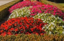 新几内亚的五颜六色的路在庭院里开花 免版税库存照片