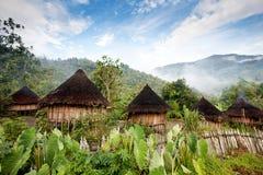 新几内亚的小屋 库存图片