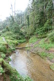 新几内亚Impatiens植物 免版税库存图片