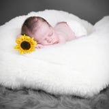 新出生可爱的婴孩 库存照片