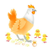 新出生母鸡的刚孵出的雏 库存图片