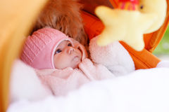 新出生的女婴画象在温暖的冬天在摇篮车穿衣 免版税库存图片