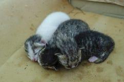 新出生的小猫睡着在海绵 库存图片