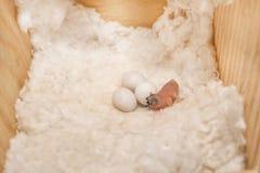 新出生的小鱼苗 免版税库存照片