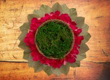 新出生的摄影师的一个圆的绿色青苔数字新出生的背景 库存照片