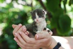 新出生的灰色小猫 免版税图库摄影