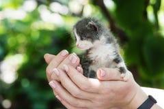 新出生的灰色小猫 图库摄影