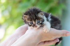 新出生的蓬松小猫 图库摄影