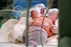 新出生的通过NICU玻璃 免版税库存照片