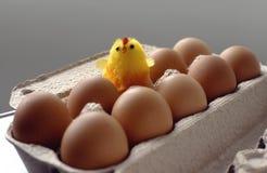 新出生的鸡 库存照片