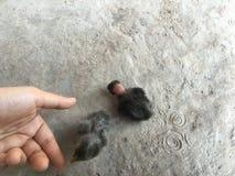 新出生的鸡 免版税库存照片