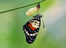 新出生的蝴蝶 免版税库存图片