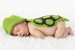 新出生睡觉的乌龟 免版税库存图片