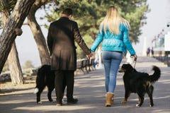 新加上狗 免版税图库摄影
