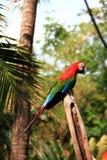 新加坡上色了鹦鹉 库存照片