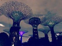 新加坡在城市从事园艺多数意想不到的对象 免版税库存照片