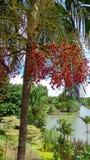 新加坡新加坡植物园树 免版税图库摄影