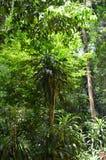 新加坡植物园的更多密林植物 免版税图库摄影