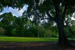 新加坡植物园系列 库存照片