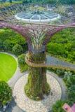 新加坡,新加坡- 2018年1月30日:在走在supertree走道的观点的未认出的人民上在庭院 免版税图库摄影