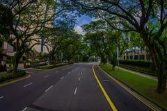 新加坡,新加坡- 1月30 2018年:circuling在路围拢的汽车出色的意见树在公众 库存图片