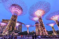 新加坡,滨海湾公园,超级树树丛 图库摄影