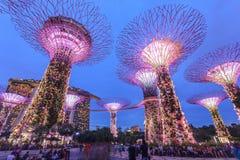 新加坡,滨海湾公园,超级树树丛 库存图片