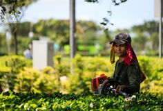 新加坡13 2019年4月:庭院工作者在绿地切开灌木 免版税库存照片