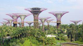 新加坡- 2015年4月2日, :Supertree树丛的天视图滨海湾公园的在新加坡 跨过101公顷 免版税库存照片