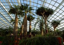 新加坡- 2014年4月28日:在花圆顶的棕榈树在滨海湾公园 免版税图库摄影